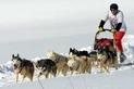 Psie záprahy na Donovaloch